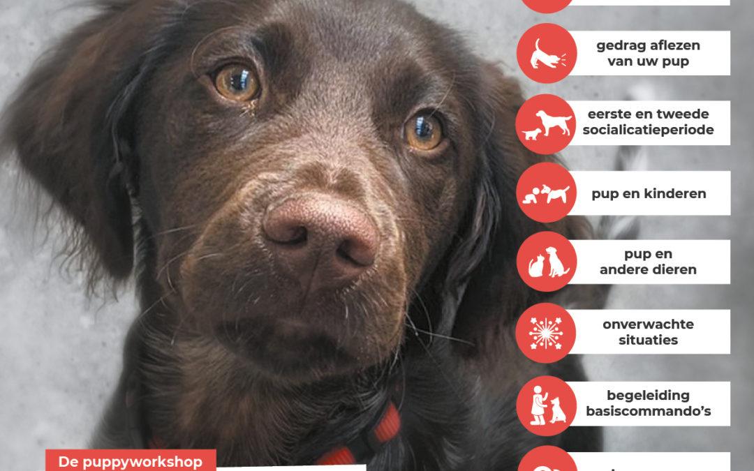 NIEUW Workshop opvoeding en gedrag pup