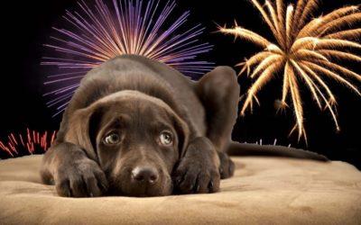 De Brutus hondenuitlaatservice tijdens Kerst en Oud & Nieuw…